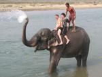 Водные процедуры со слонами – новый аттракцион для туристов